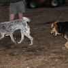 LULU (hound, pup), Maddie 2