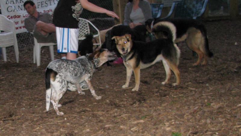 LULU (hound, pup), Maddie
