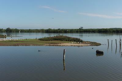 Petite île avec des cigognes à gauche, des mouettes, une grue, etc...