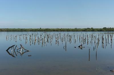 Et de l'eau, encore de l'eau.  Avec quelques cormorans qui se chauffent.