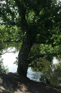 Le vendredie 02/09/2011 Catou et moi visitons le parc ornithologique du Teich.  Beaucoup d'eau, quelques arbres, de la broussaille, mais peu d'oiseau.