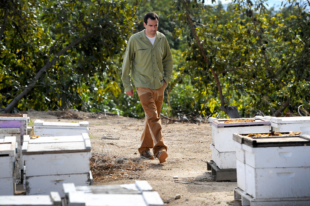 . David Jefferson checks beehives in his families\' Jefferson Famrs avocado orchard in Somis, Tuesday, February 11, 2014. Jefferson is president of Bloom Honey, a Thousand Oaks-based raw honey purveyor with more than 1,000 beehives in California, Nevada and Arizona. (Photo by Michael Owen Baker/L.A. Daily News)