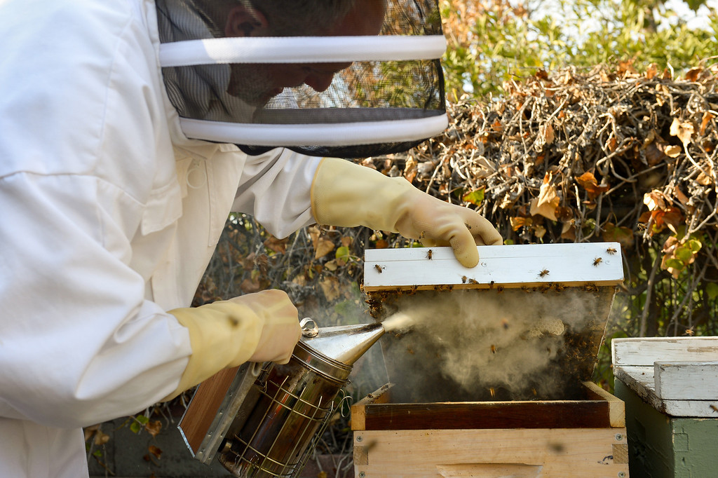 . David Bock smokes a beehive in the backyard of his Glassell Park home Tuesday, February 25, 2014. (Photo by Michael Owen Baker/L.A. Daily News)