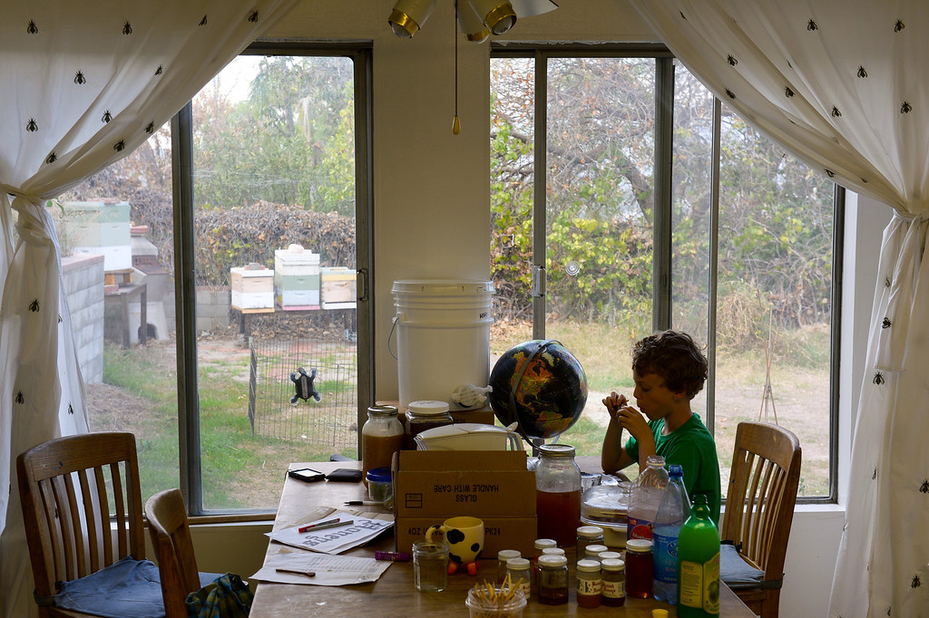 . With beehives in the backyard Simon Bock, 8, samples honey in the dining room of his Glassell Park home, Tuesday, February 25, 2014. (Photo by Michael Owen Baker/L.A. Daily News)