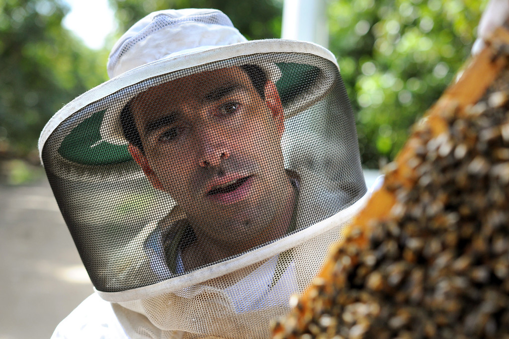 . David Jefferson looks for the queen in a beehive frame in his families\' avocado orchard in Somis, Tuesday, February 11, 2014. Jefferson is president of Bloom Honey, a Thousand Oaks-based raw honey purveyor with more than 1,000 beehives in California, Nevada and Arizona. Jefferson, whose family has large avocado and citrus farms in Ventura County, is preparing some hives to move to the Central Valley, where they will pollinate the state\'s almond crop. (Photo by Michael Owen Baker/L.A. Daily News)
