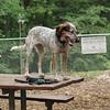 LULU (girl pup, hound), isabella
