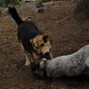 LULU (hound pup), Maddie