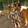 Shamus, Chloe, Lenny original