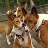 Shamus, Chloe, Lenny JULY3