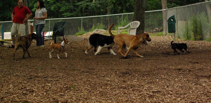 faith (patterdale terrier)