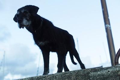 Le vieux chien de la famille.
