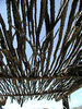 Ocotillo awning