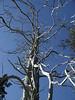 Plasma Ball Tree
