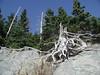 Dead Tree Zone