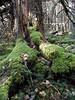 A fallen tree . . .