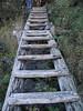 Ladder steps