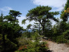 Lone Pine Shrine