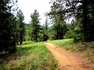 trail at Roosevelt National Forest