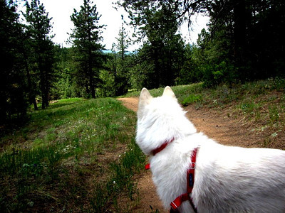 Anya along the trail at Roosevelt National Forest