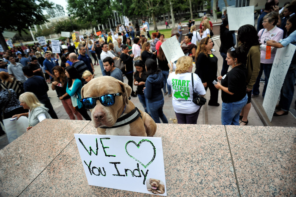 . Sonny Ray and owner Josh Reyes gathered with other supporters of Indy the pit bull at Van Nuys court Tuesday, June 10, 2014. Carlos Duarte was in court for allegedly abandoning the badly burned dog in Winnetka alley on July 4th.  (Photo by Hans Gutknecht/Los Angeles Daily News)