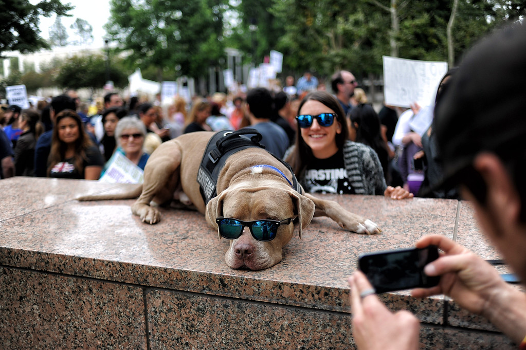 . Sonny Ray and owner Josh Reyes gathered with other supporters of Indy the pit bull at Van Nuys court Tuesday, June 10, 2014. Suspect Carlos Duarte was in court for allegedly abandoning the badly burned dog in Winnetka alley on July 4th.  (Photo by Hans Gutknecht/Los Angeles Daily News)