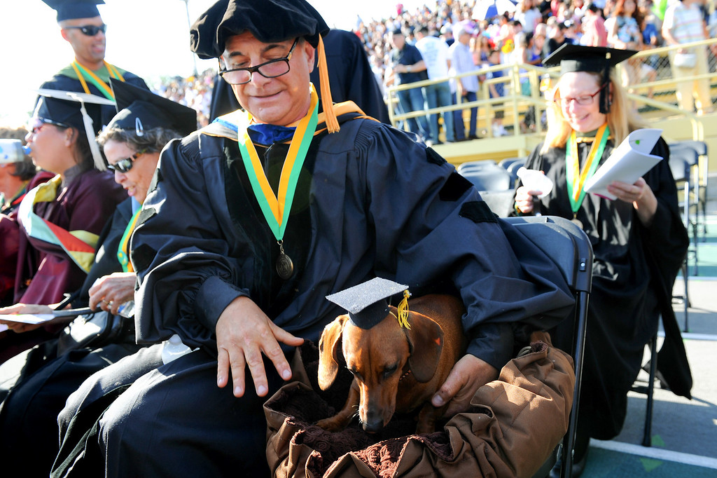 ". Sociology teacher Michael Vivian and his dog ""Izzie Schnauppsie\"" take a seat at the Los Angeles Valley College graduation, Tuesday, June 10, 2014. (Photo by Michael Owen Baker/Los Angeles Daily News)"