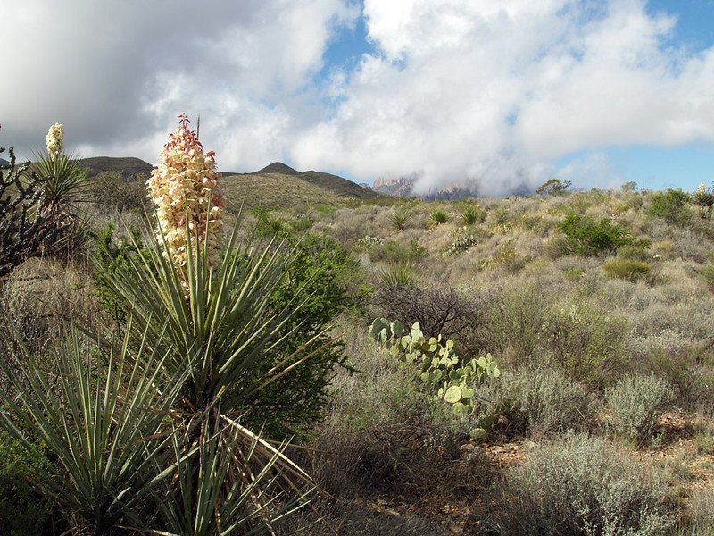 THE CHISOS MOUNTAINS IN CLOUDS<br /> We couldn't very well pass up a photo opportunity like this, could we?