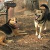 sakagawea & maddie