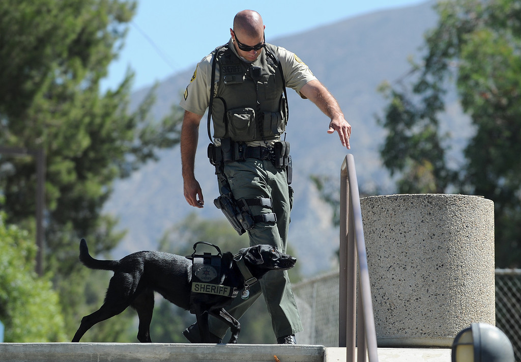 . Sheriff\'s Deputy Guillermo Loza and Tula do a search on the campus of Mission College. Tula is a former Marine dog that did multiple tours in Afghanistan. Tula is now working as an Explosives Detection Canine with the Sheriff\'s Dept.\'s County Services Bureau. When the Marines began downsizing the force in Afghanistan, they contacted US law enforcement agencies to see who might be interested in adopting their dogs., CA. 8/13/2013(John McCoy/LA Daily News)