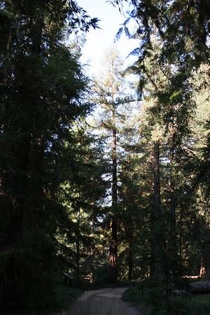 09.03.11 Redwood Grove