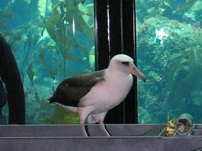 090331 Monterey Aquarium