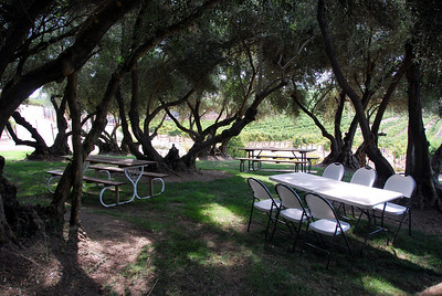 We had lunch (very good grape-wood chicken) under the 100-year-old olive trees.