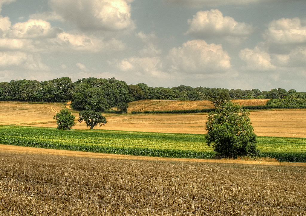 A variety of crops on a sunny warm afternoon.