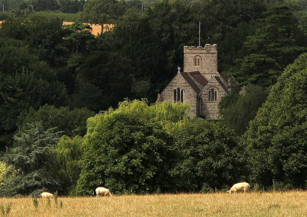 The church at Milborne St Andrew across the fields.
