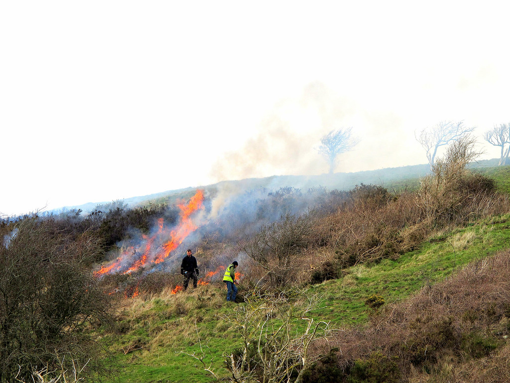 Rangers burning off Gorse bushes which are reducing grazing areas.