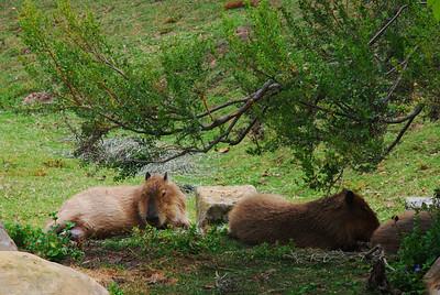 100731 Santa Barbara Zoo