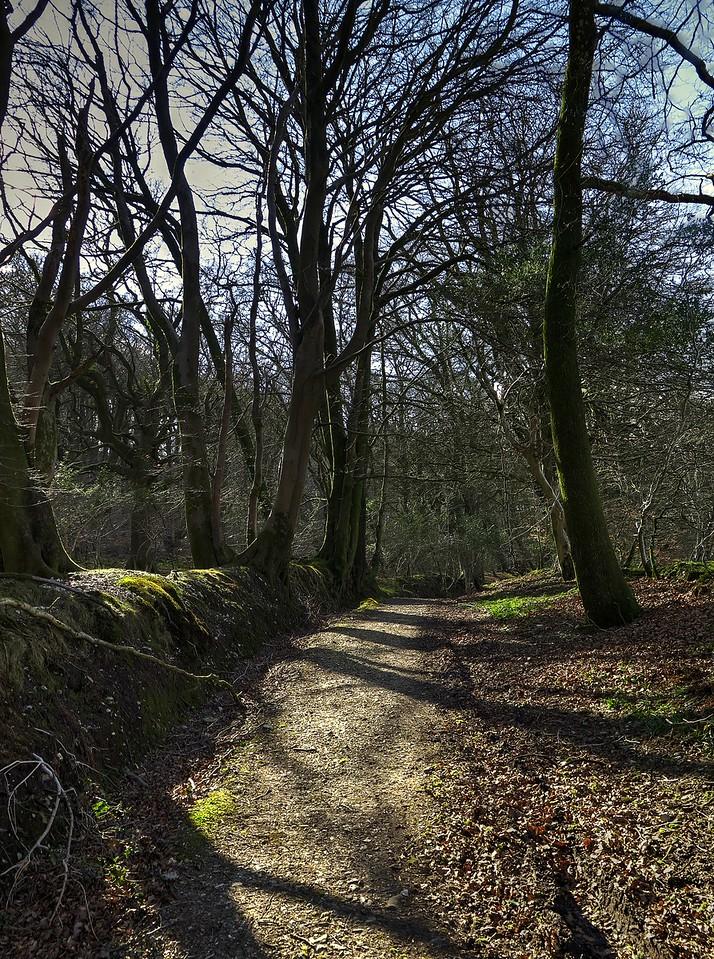The track alongside Lewesdon Hill