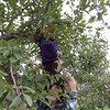 Apple picking at East Fishkill Farm