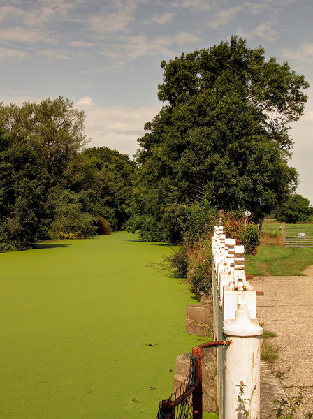The colour really was like this photo.   Weed covers the water surface in the mill pond.