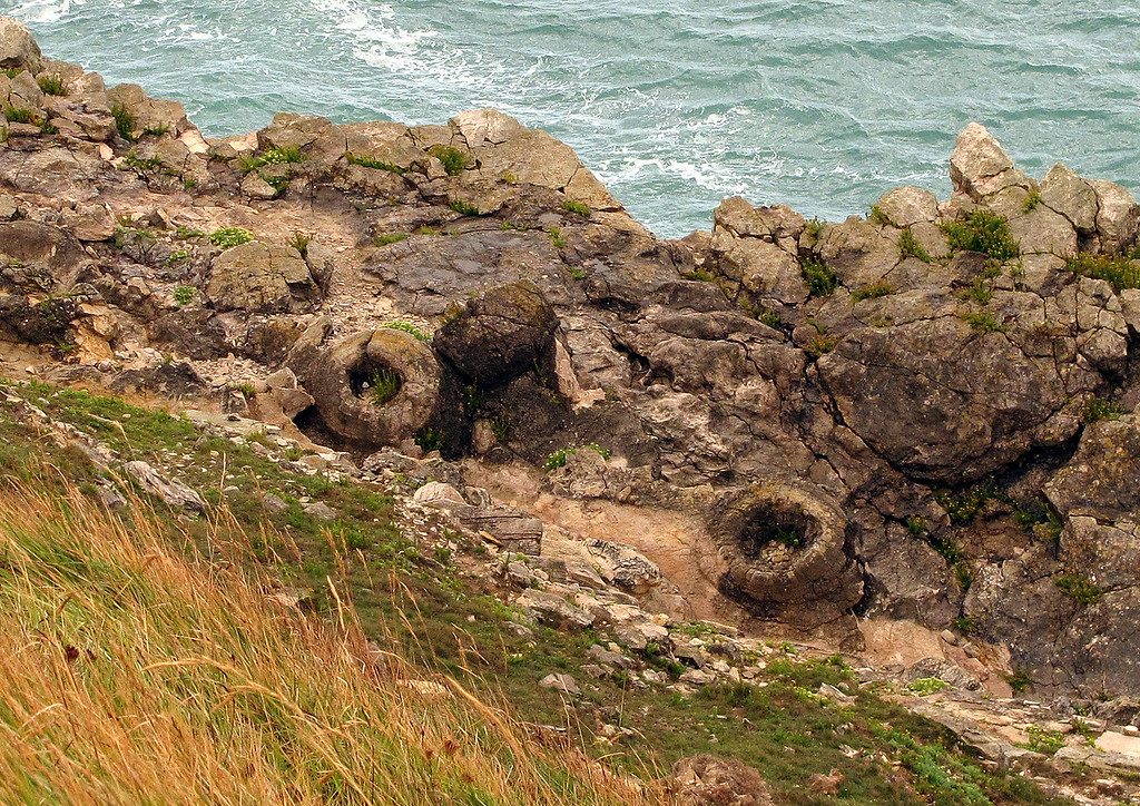 After the rain and onto the coast path, these are remnants of fossilised trees just Eastward of Lulworth Cove.