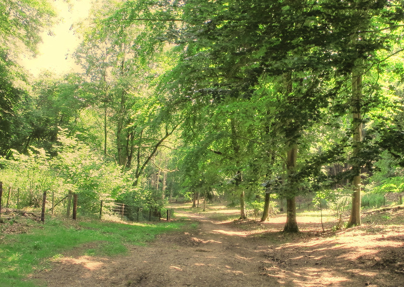 The track up to Blandford Forest from Durweston.