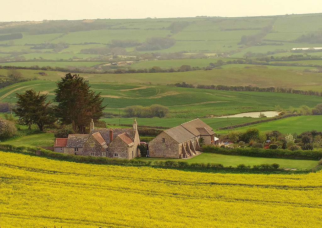 Sandyhills Farm amid the Oil Seed Rape.