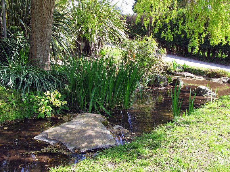 A pretty little water garden adjacent to a Council lay by.