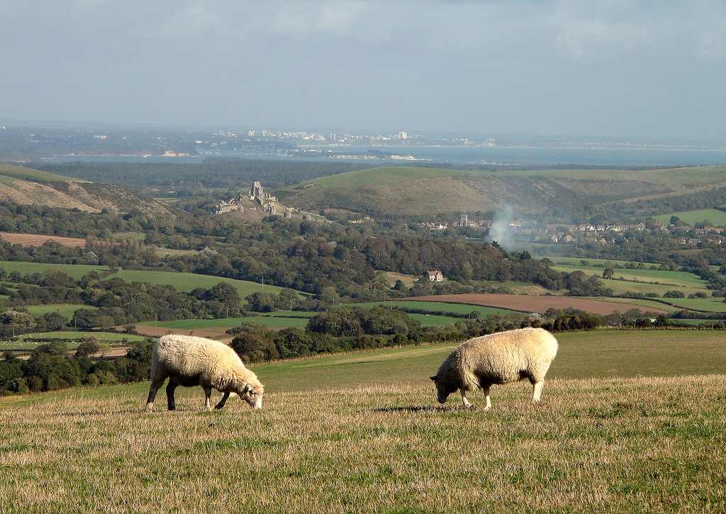 Looking from the path up to Swyre Head, Corfe Castle and beyond is Poole Harbour.