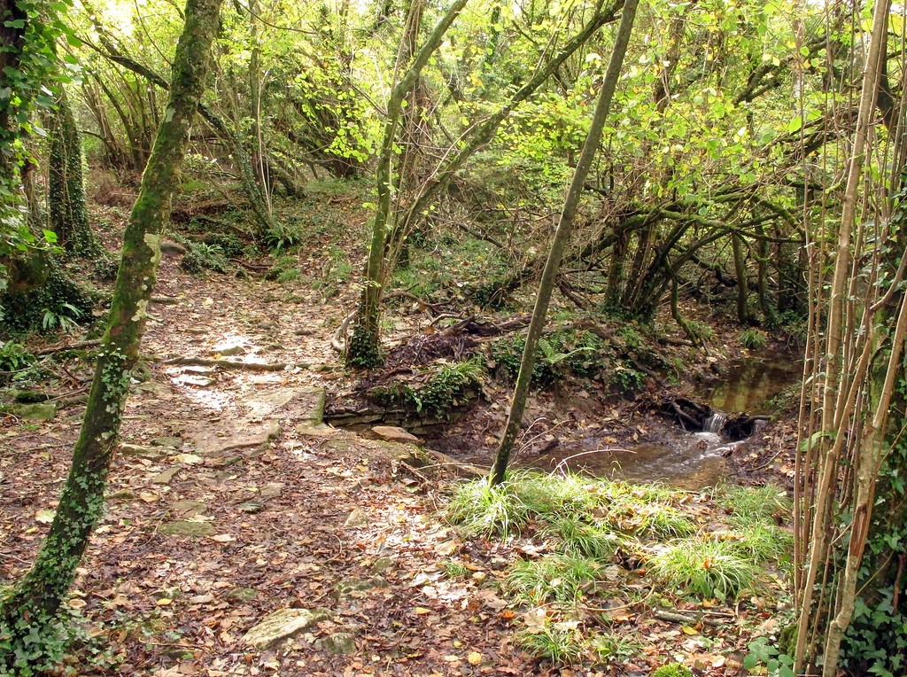 The sound of the tinkling stream added to the sylvan charm on this path.