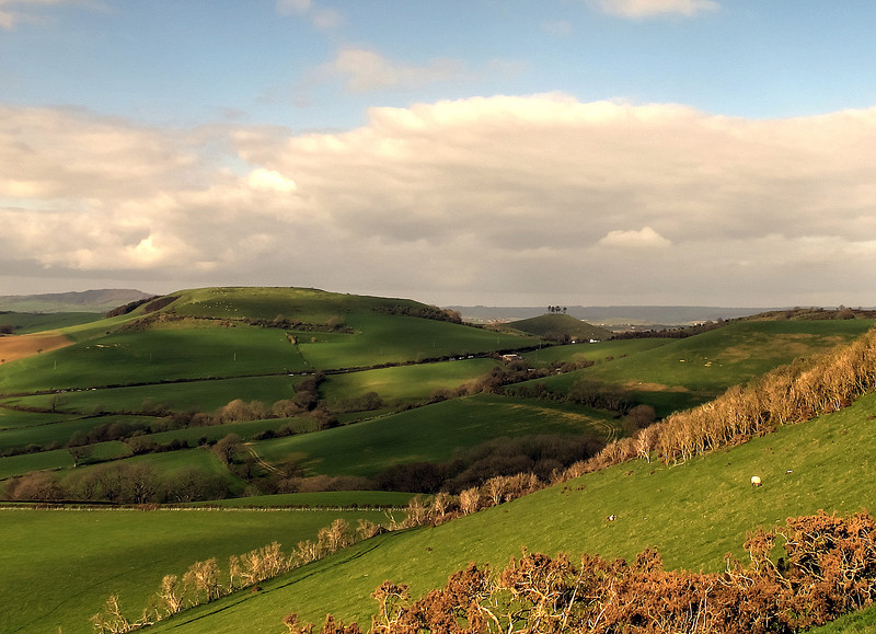 On up again towards Thorncombe Beacon and the view inland - Colmer's Hill with it's topknot of trees is near the  finish.