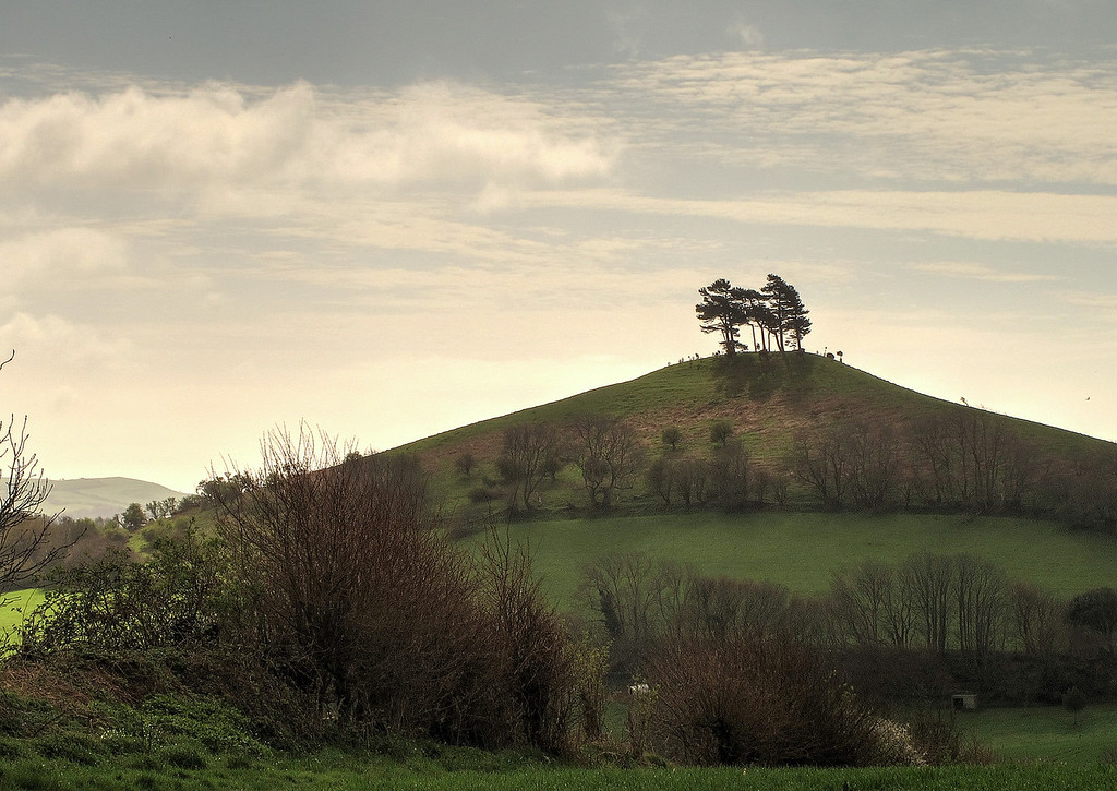 Looking back to the iconic Colmer's Hill with it's topknot of trees (which were absent in the eighteenth century according to an engraving in the Ilchester Arms pub, where a welcome ale was taken after the walk).