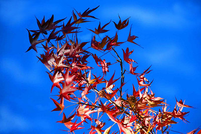 """Скоро осень , за окнами август..."""
