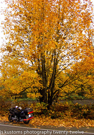 11-4-2012 fall colours