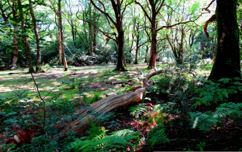 The lunch spot at Redshoot Wood, an idylic sylvan setting and a dry tree trunk to sit on.